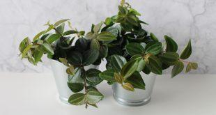 plantas interior calidad aire interior