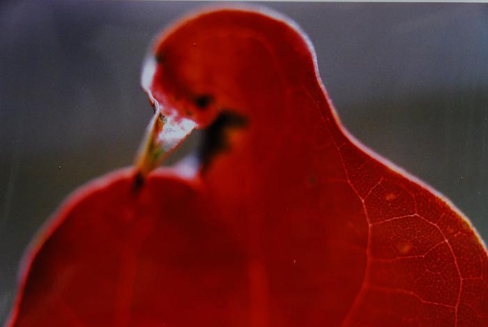 017 大嘴鳥 75-112 2009