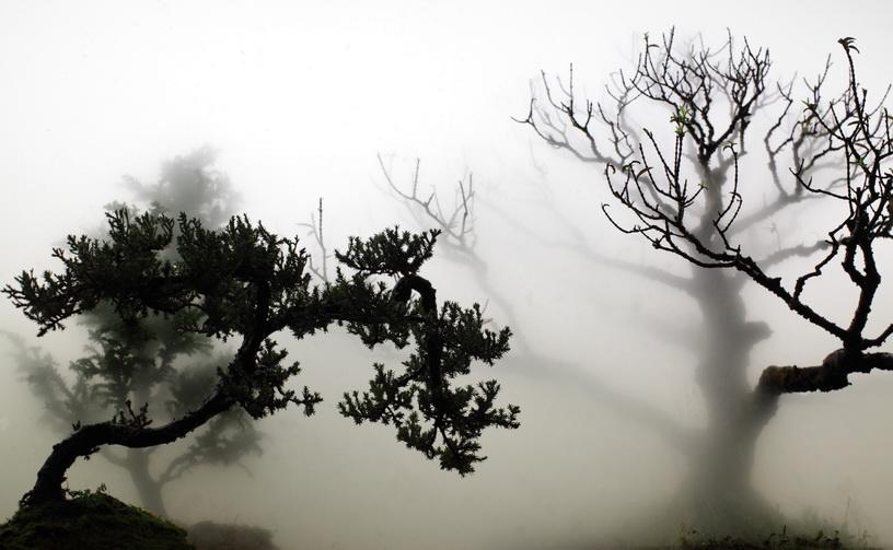008 「煙林圖」 001   2012 單頻道錄影
