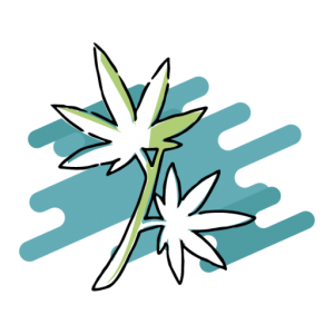 corso cannabis