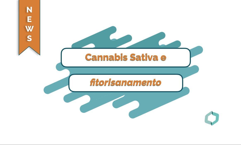 Cannabis Sativa e fitorisanamento