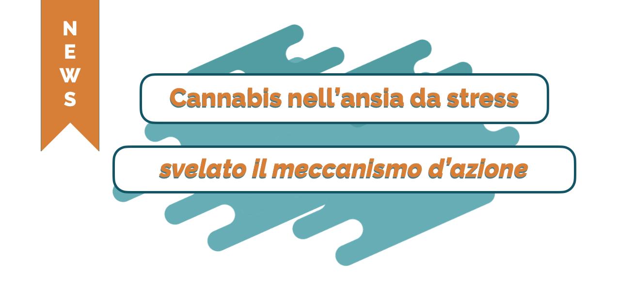 Cannabis nell'ansia da stress - svelato il meccanismo d'azione - Cannabiscienza