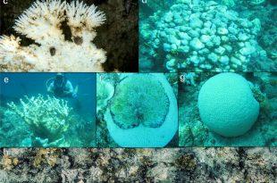 blanqueamiento arrecifes de coral