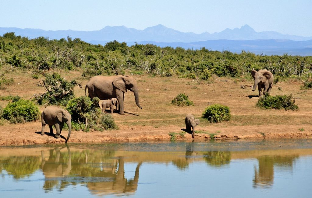 elefantes co2