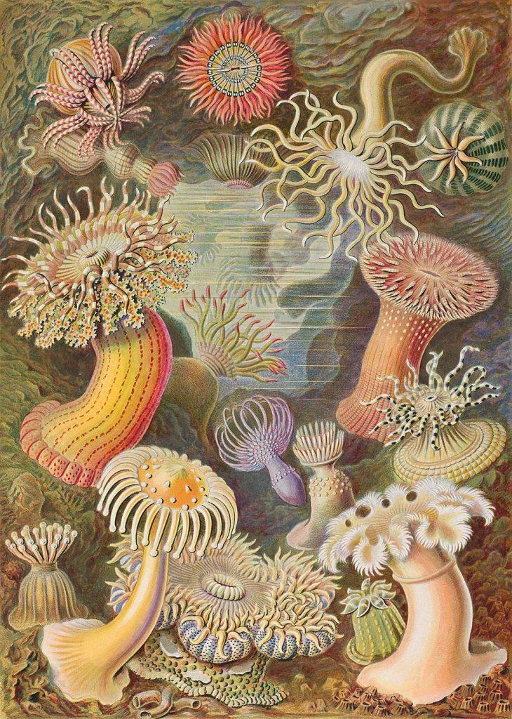 medusas-ilustraciones