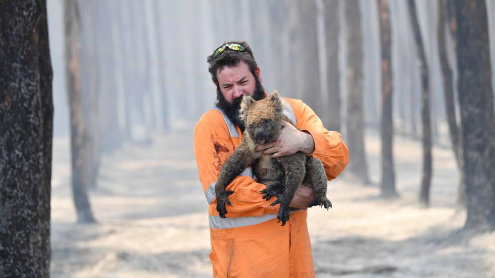 koalas incendio australia