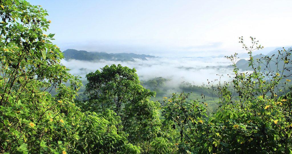 amazonas deforestación
