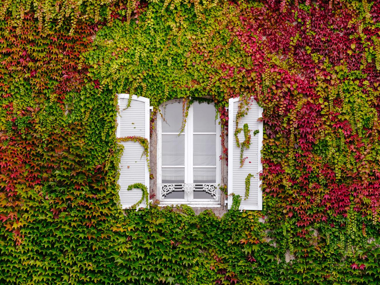 Fenêtre de maison entourée de lierre
