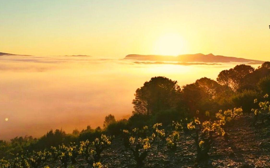 Sol granite vin