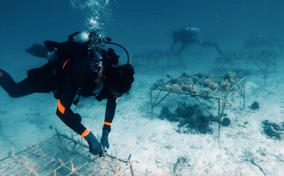 Plantez un corail