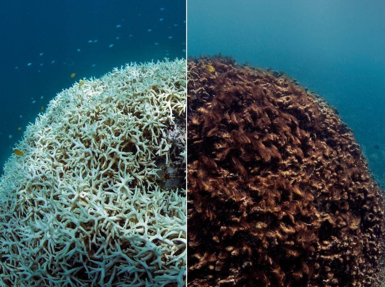extinction coraux