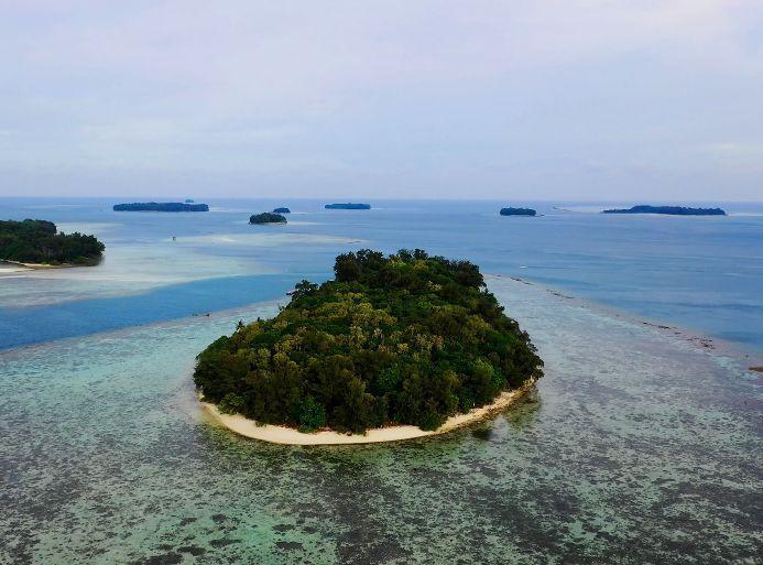 Restaurations de coraux