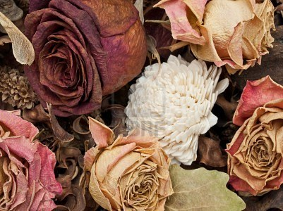 Come seccare i fiori