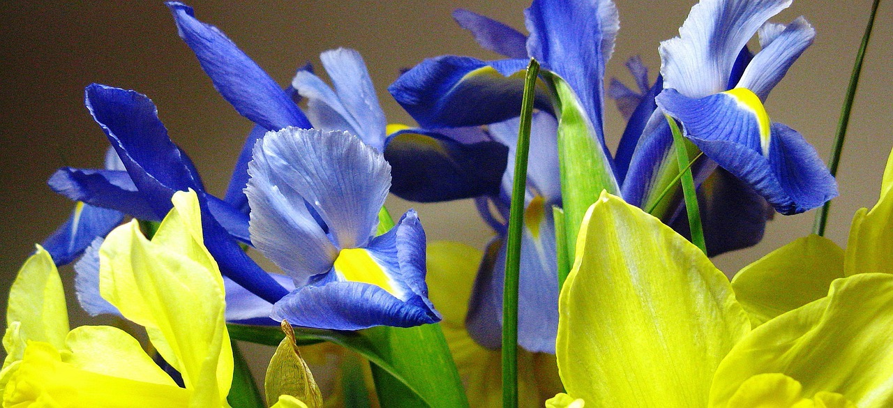 Iris mix