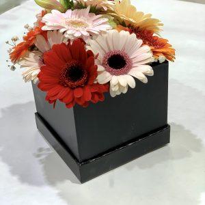 Flowerbox con mini gerbere