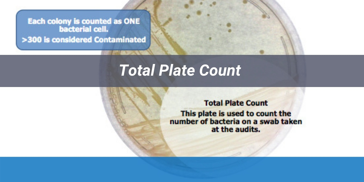 Bacteria Series : Total Plate Count