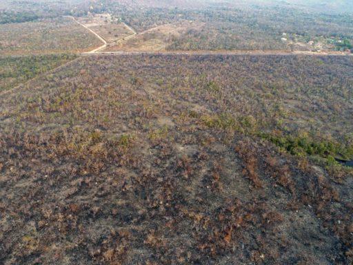 Si tu veux vraiment sensibiliser aux feux de la forêt amazonienne, fais-le avec les bonnes photos
