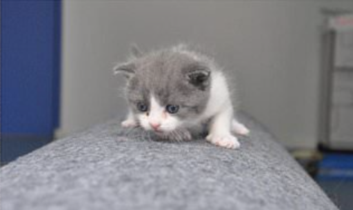 Ramener ton chat d'entre les morts, c'est possible grâce à une firme chinoise de clônage