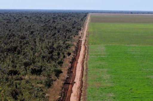 2,5 millions de tonnes de soja par an: la Belgique a aussi sa part de responsabilité dans la déforestation