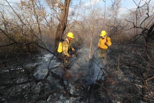Dans l'indifférence générale, 2,3 millions d'animaux sont morts dans des incendies en Bolivie