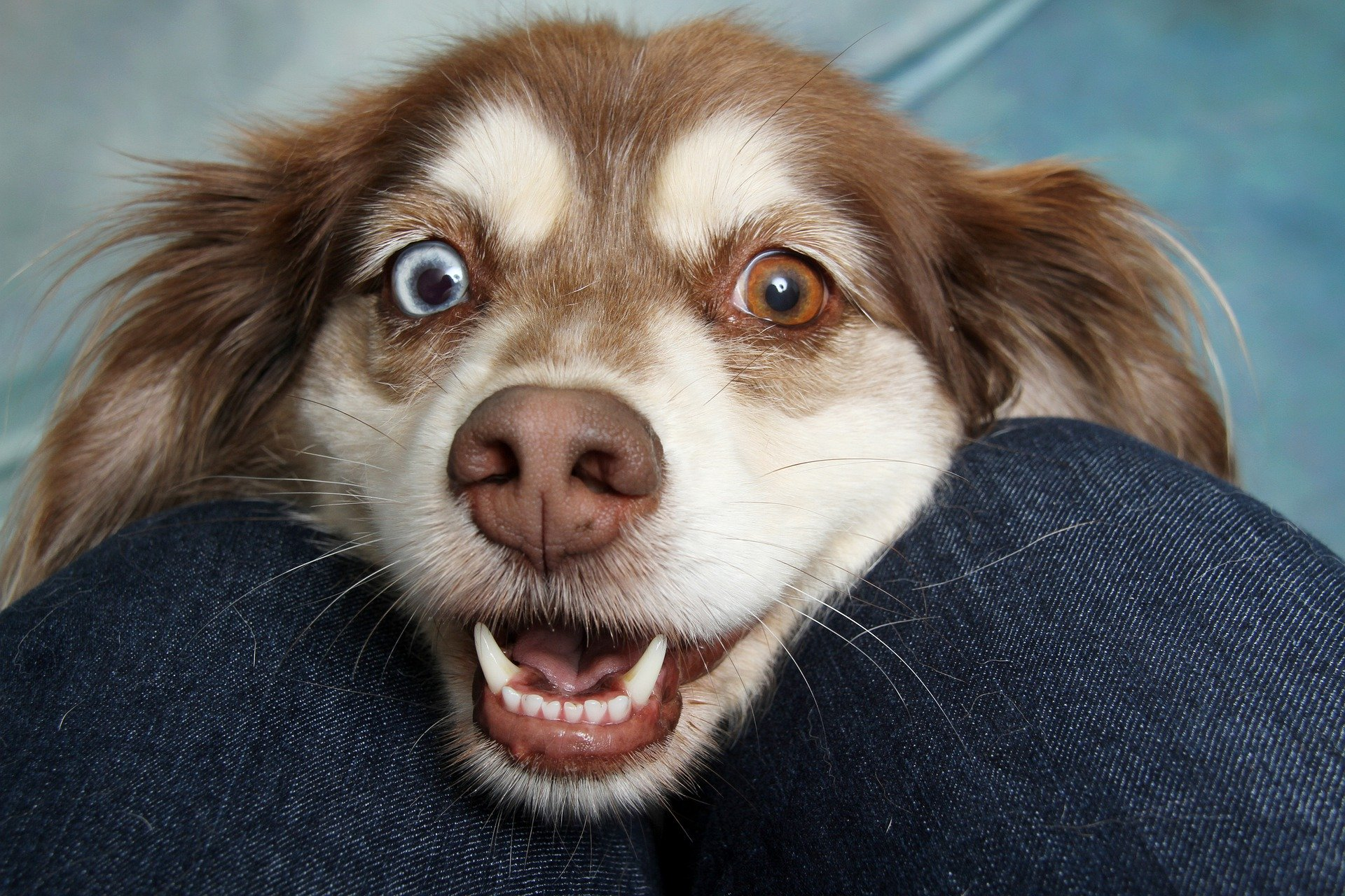 Chien Fait Ses Besoins La Nuit ces 13 comportements que ton chien a certainement sont