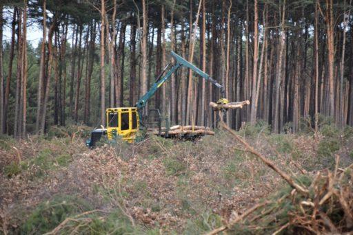 Tesla: autorisation de raser une forêt allemande pour y installer son usine