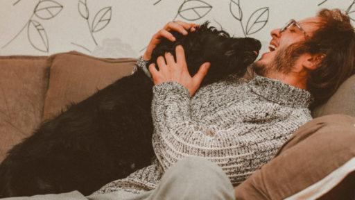 Voici les 17 meilleures séries et films avec des chiens sur Netflix