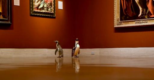 Des pingouins s'offrent une virée au musée pendant le confinement