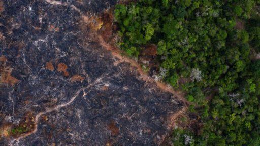 La déforestation sous les tropiques reprend de plus belle à cause du coronavirus