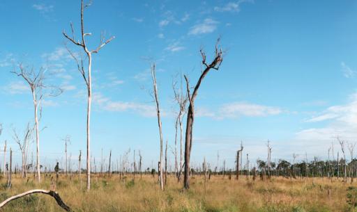 La désolation en Amazonie: la forêt amazonienne se transforme petit à petit en savane
