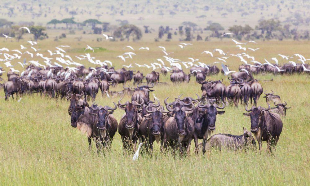 Africa, Tanzania, P.N. Serengeti, sabana