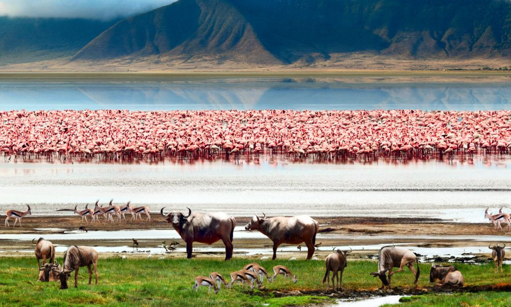 Africa, Tanzania, P.N. Manyara, lago Manyara, safari