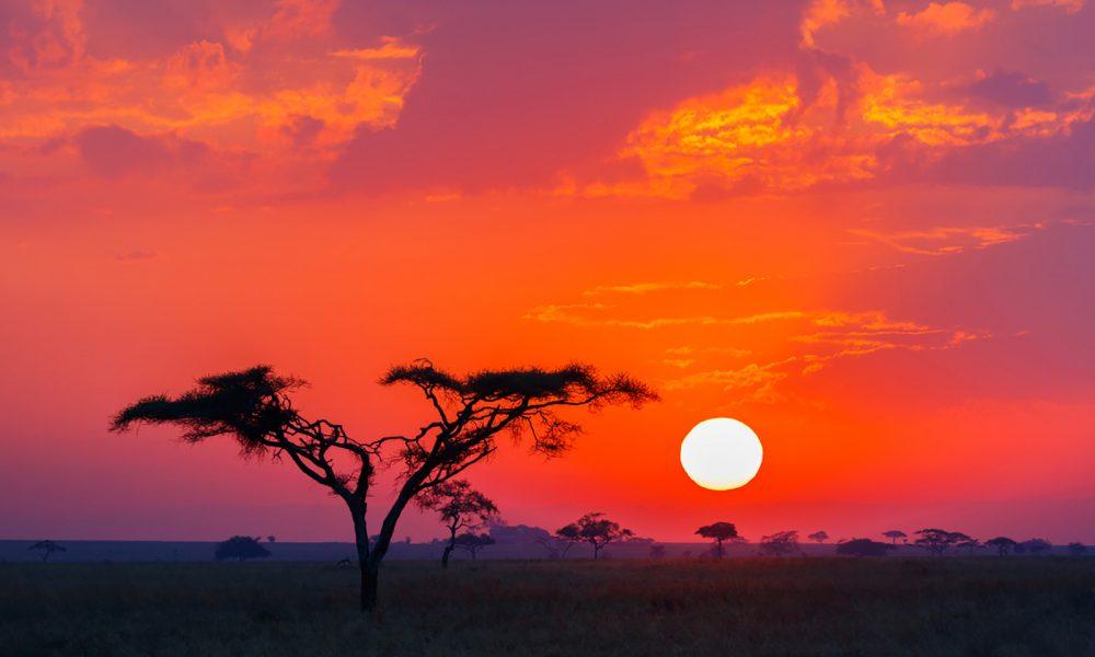 Africa, Tanzania, P.N. Tarangire