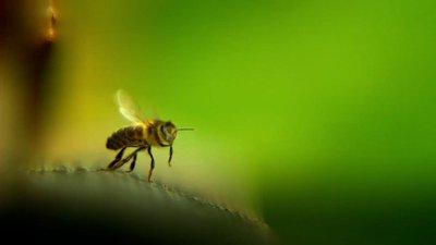1 Avec mes abeilles macro