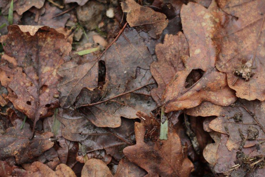 Inès Léraud journal Breton feuilles mortes