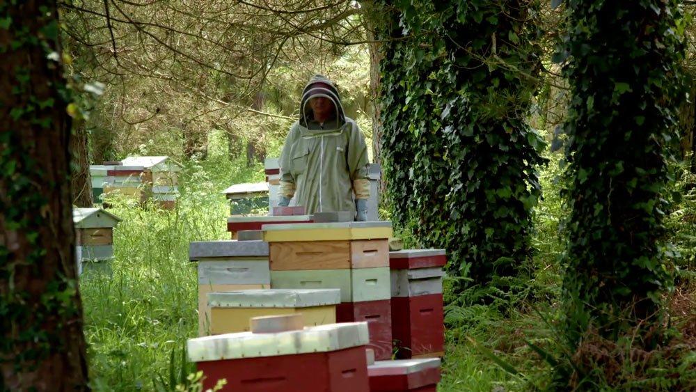 2 Avec mes abeilles apiculteur