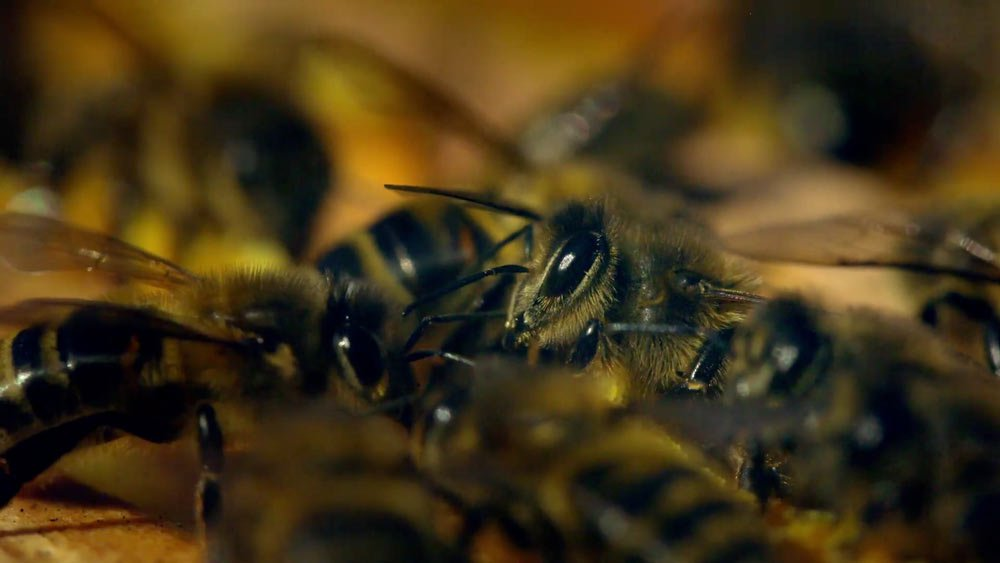 4 Avec mes abeilles plusieurs abeilles