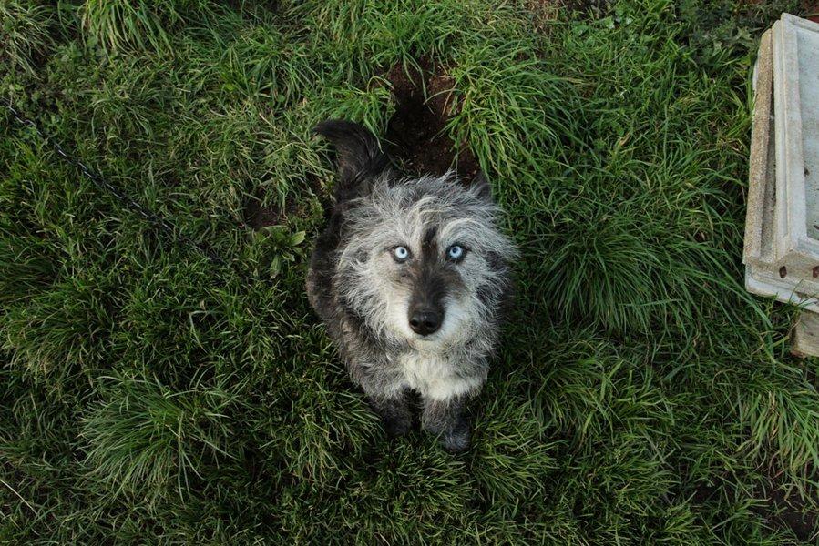 Inès Léraud journal Breton chien