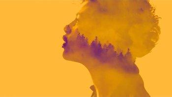 Cover image yellow sunvizors