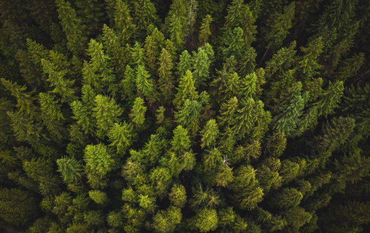 Travaux de compensation écologique et hydraulique