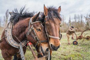 2 chevaux sur site de compensation écologique à Issou