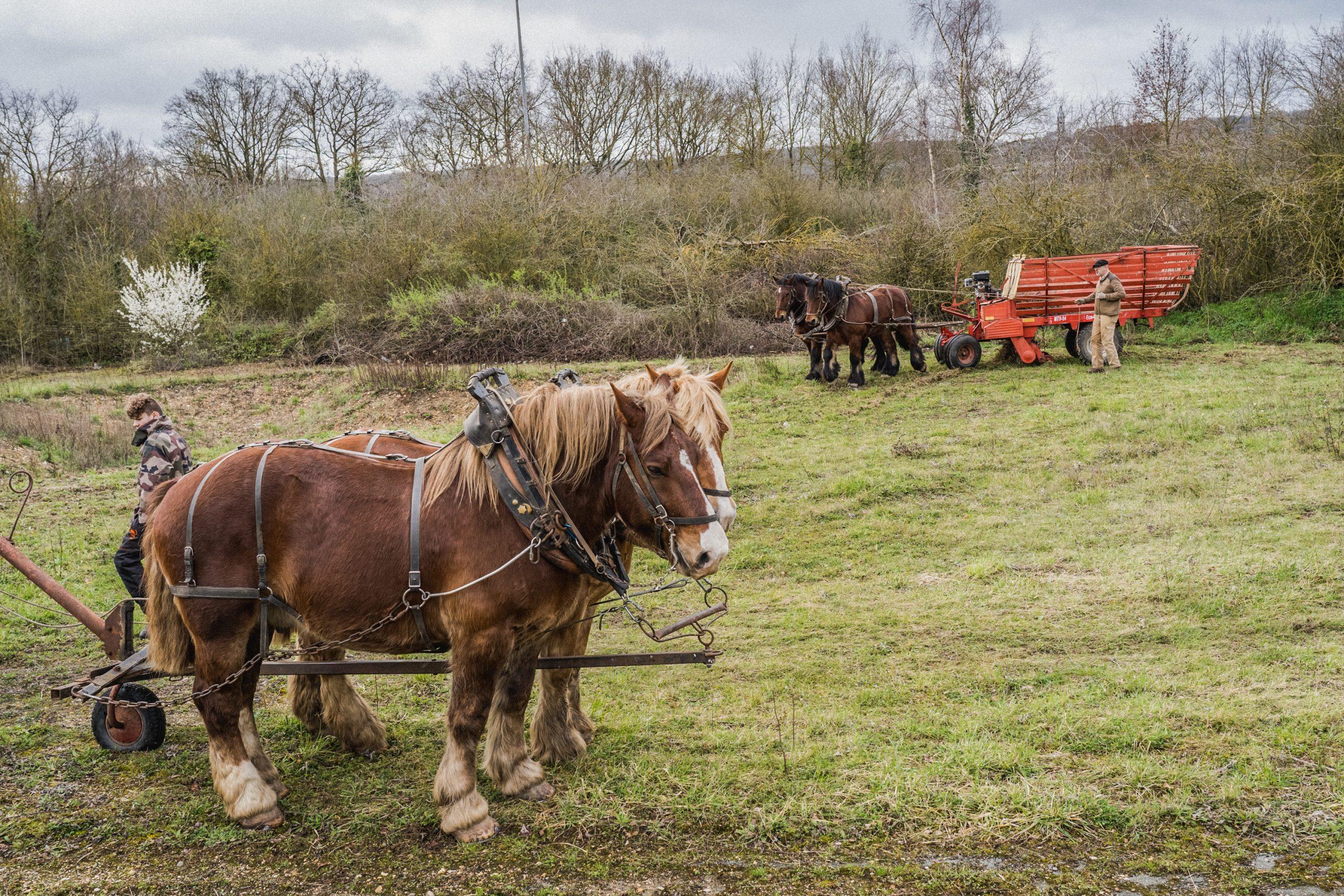 4 chevaux et le personnel