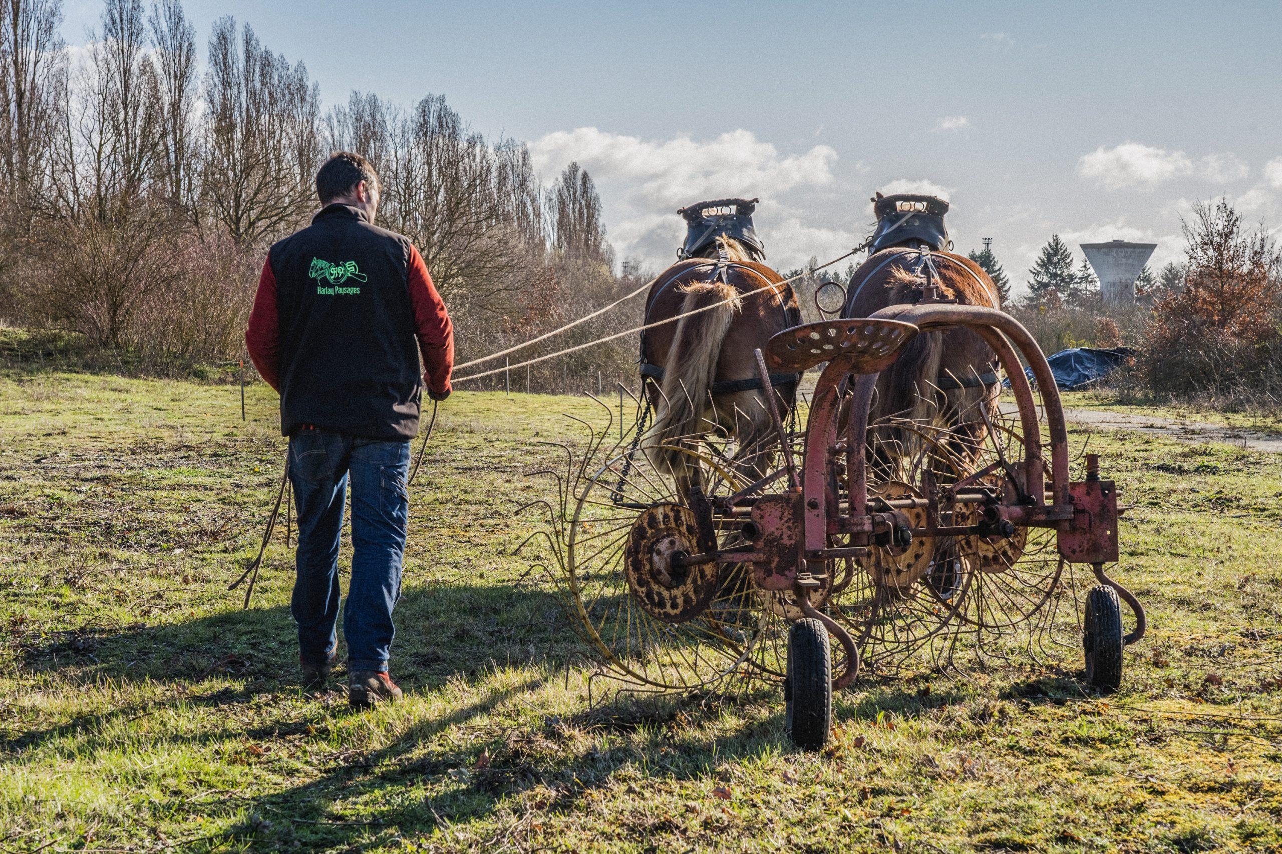 2 chevaux sur le site et le personnel