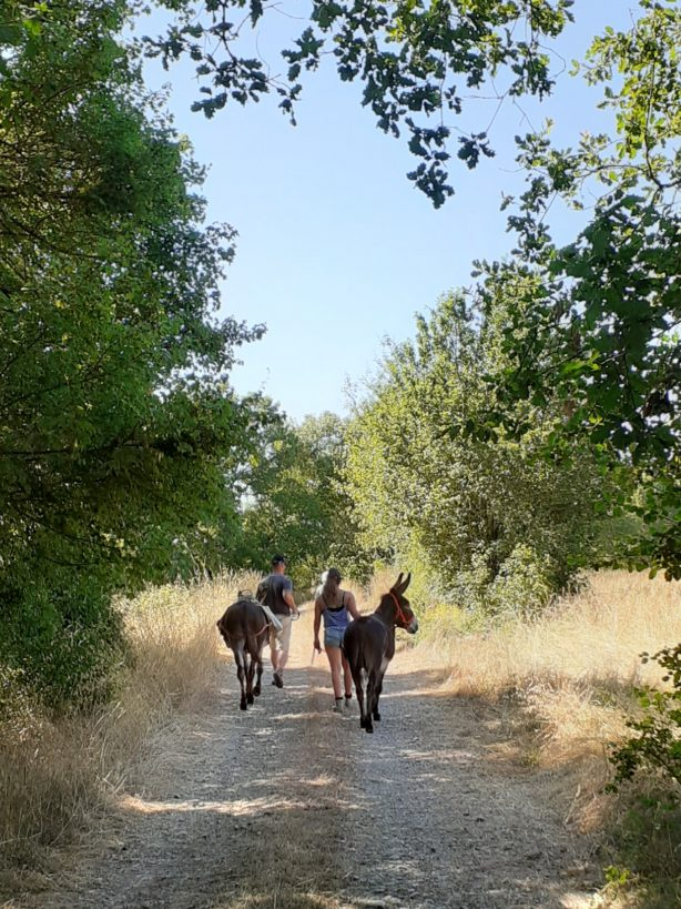 Randonnée en âne