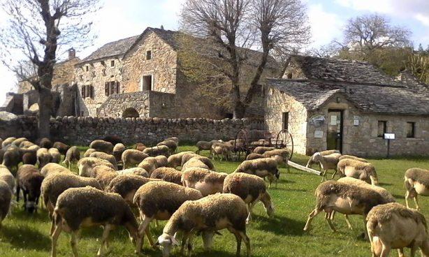 Visite d'une ferme d'antan