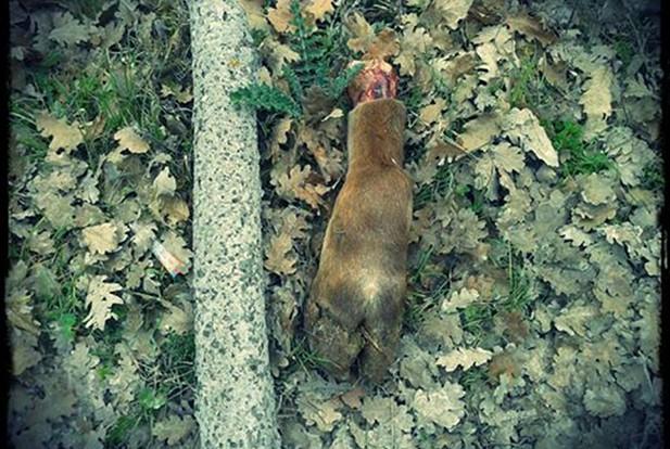 Cervo (foto via Gotico Abruzzese)