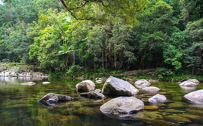 Jour 10 : Les parcs nationaux de Mossman Gorge et de Daintree