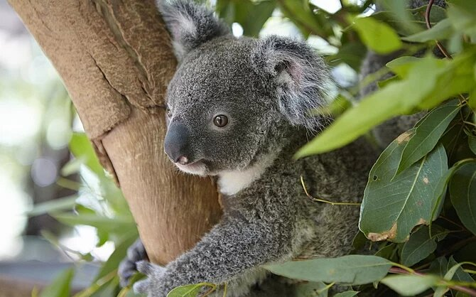 Jour 14 : Snorkeling, Koalas et wallabies à Magnetic Island