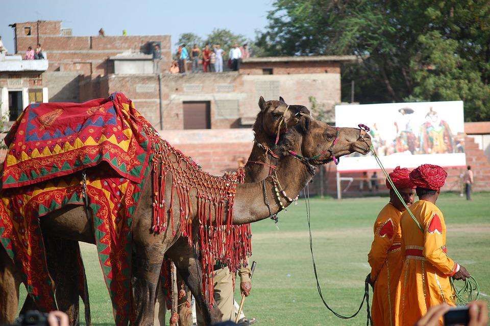 11 Mars 2020 : Jour 6 : Udaipur  - Pushkar