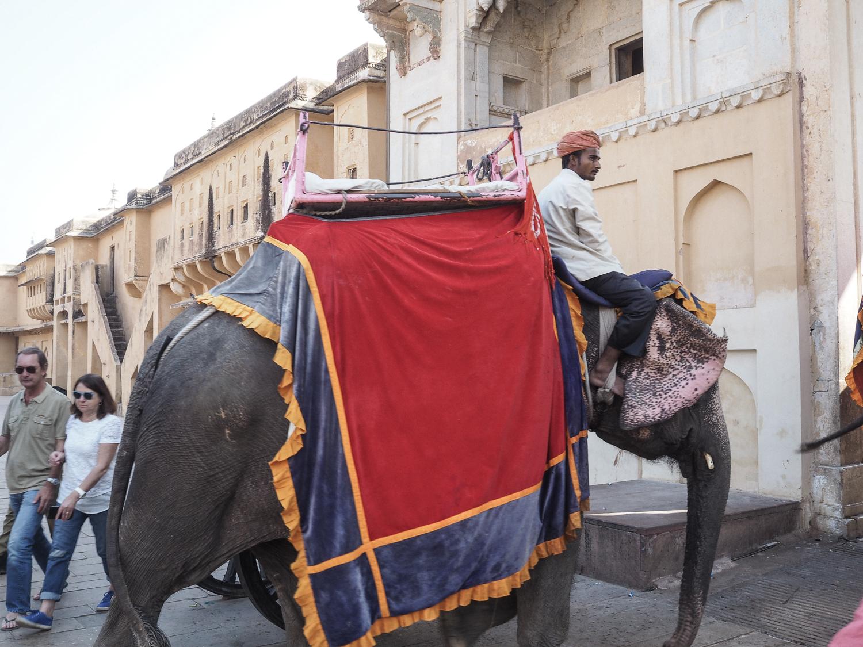 Jour 12: Bhavnagar -Palitana – Bhavnagar (54Km/1h A-R)